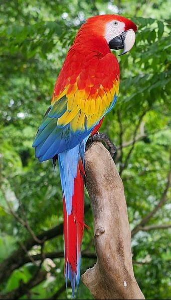 Фотография находится также в категории: скачать бесплатно фото птиц.